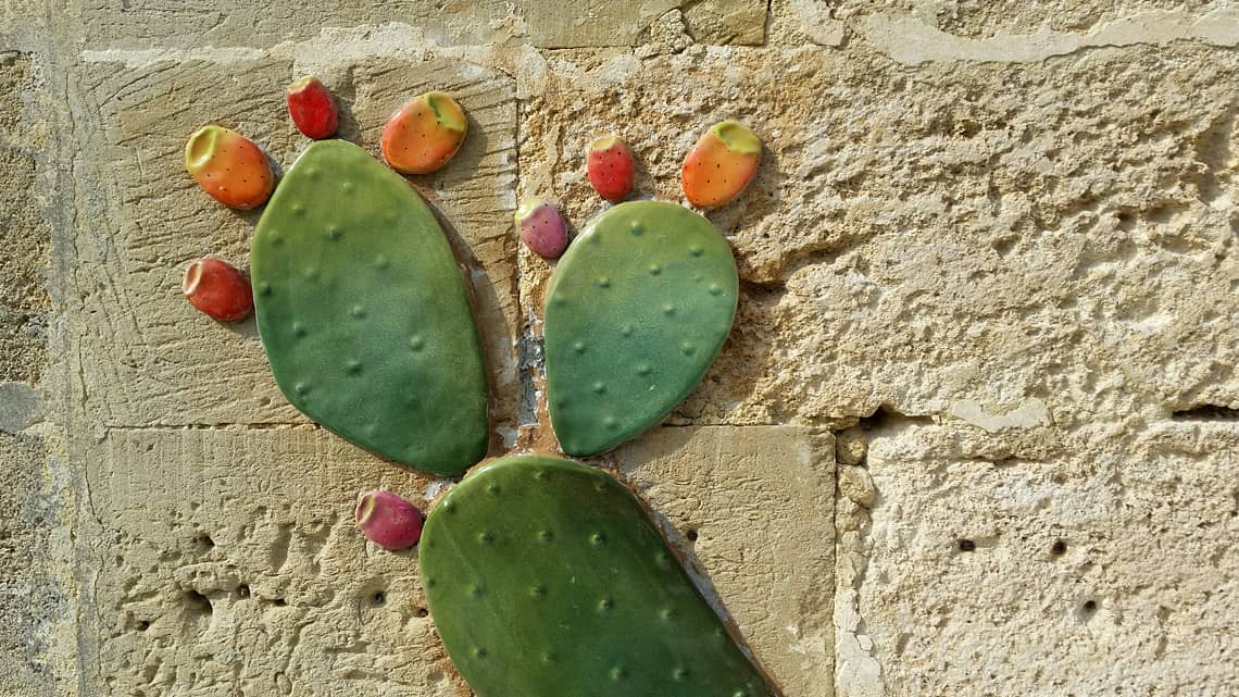 Wall with cactus